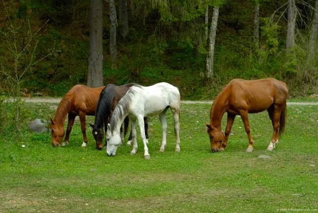 http://onpasture.com/wp-content/uploads/2013/03/horses-pasture-646x433.jpg