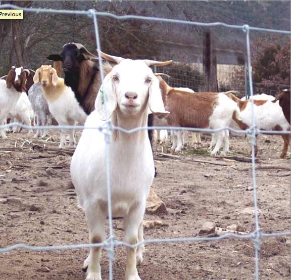 Best Portable Electric Fence For Goats - Best Fence Design 2018