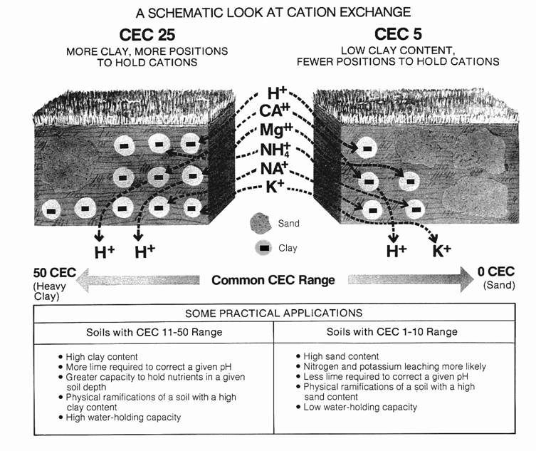 Here you see a contrast in CEC.  Clay soil has a high CEC and sand is very low.  See, that's why it's harder to grow things in sand - it has very few cations or nutrients.   Illustration from Spectrum Analytic, a soil testing company in Washington Court House, OH