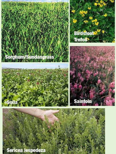 Here are pictures of these forages.  We'll be providing more information on them in future issues.