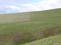Photo points showing visual differences of grazing impacts on decadent grass stands