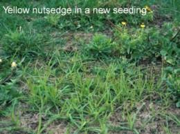 Photo courtesy of www.agry.purdue.edu