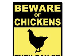 Beware of Chickens Small