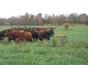 Flexible grazing with a portable fence inside a permanent fence.