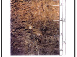 Here's the profile for New York's state soil