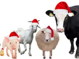 ChristmasAnimals2