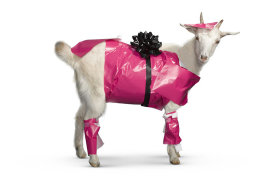 giftwrappedgoat