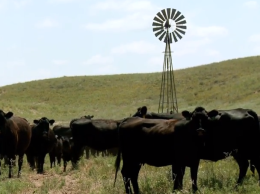 Pelster Angus Ranch