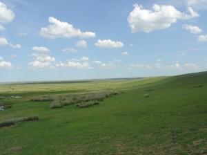 Grasslands photo courtesy of wikipedia