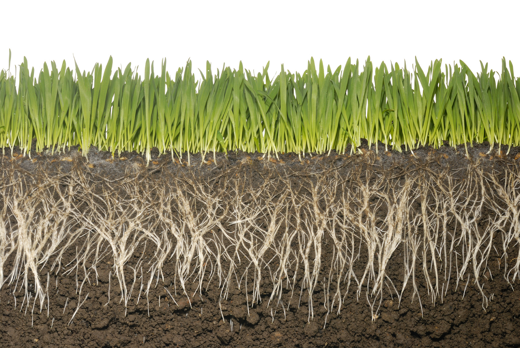 Roots need rest to reach resources managing for pastures for Lawn topsoil