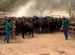 Low-Stress Animal Handling NSW