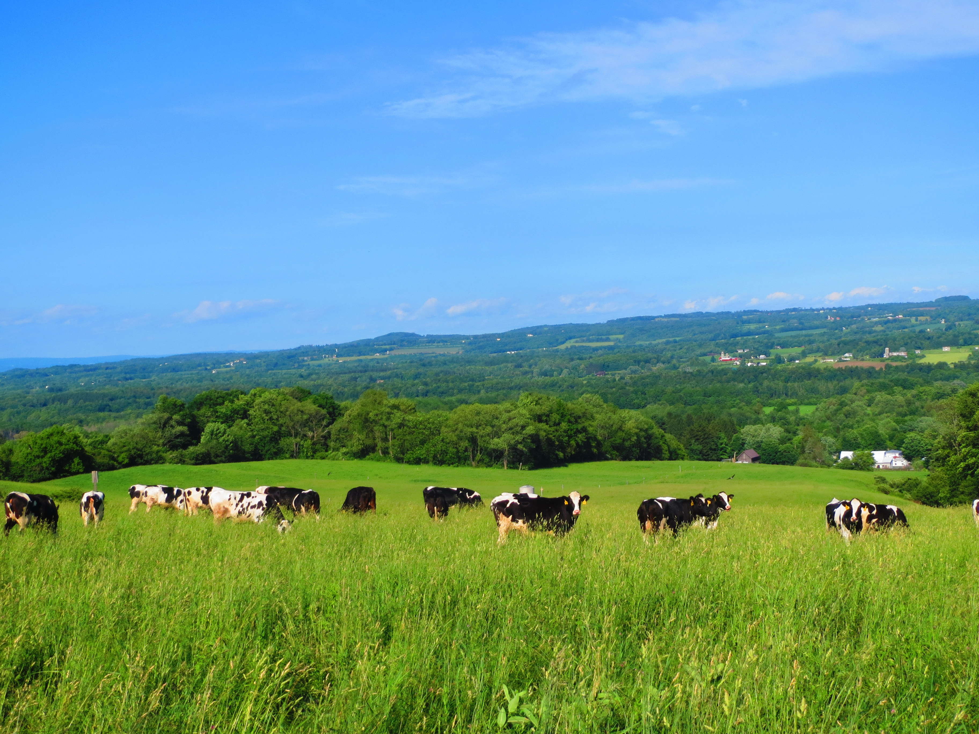 Great Gobs of Gargantuan Grass « On Pasture On Pasture