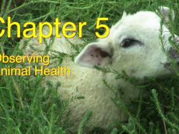 Observing Animal Health