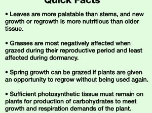 Quick Grass Facts