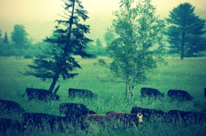 ranch-history-fields
