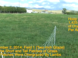 Comparing pastures side by side