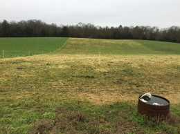 Damage from overgrazing frosted oats - Jan 2016 Georgia