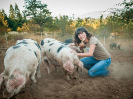Rebecca Thistlethwaite and pigs