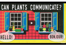 Can Plants Talk to Each Other