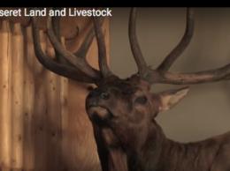 Deseret Elk