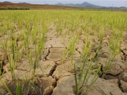 drought-7591